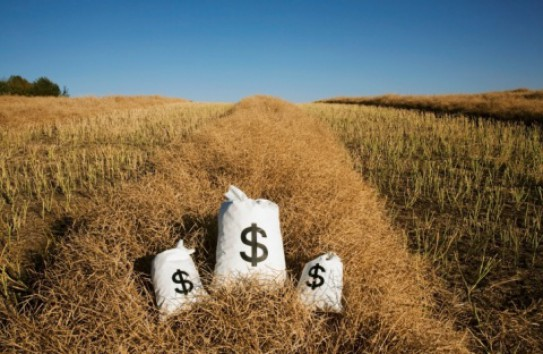 Размер субсидий аграриям будет